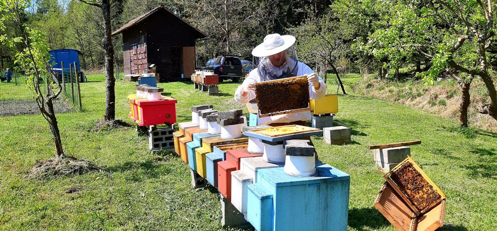 Beekeeping-Jere-cebelarstvo